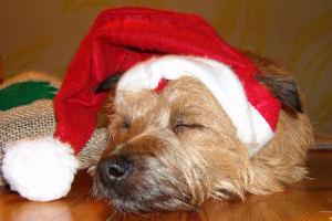 Schulhund Bruno macht ein Nickerchen