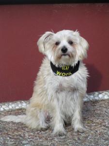 Besuchsunde Stammtisch - Therapiehund Roula lädt ein