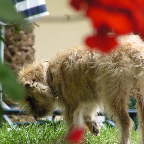 Roula, der griechische Straßenhund
