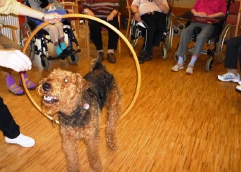 Therapiehund Nasco im Seniorenheim