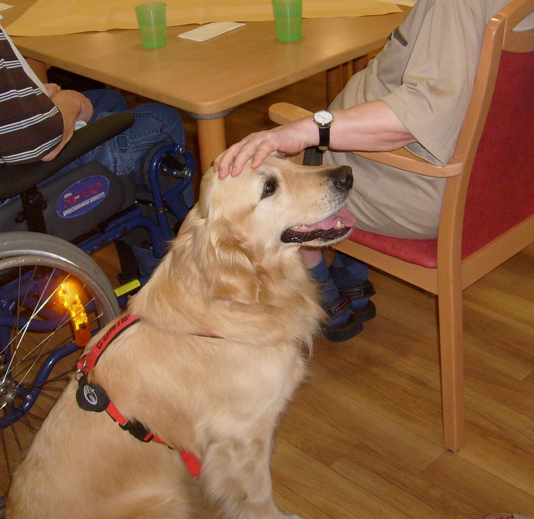 Besuchshündin Curie im Auftrag der Hunde im Sozialdienst im Einsatz