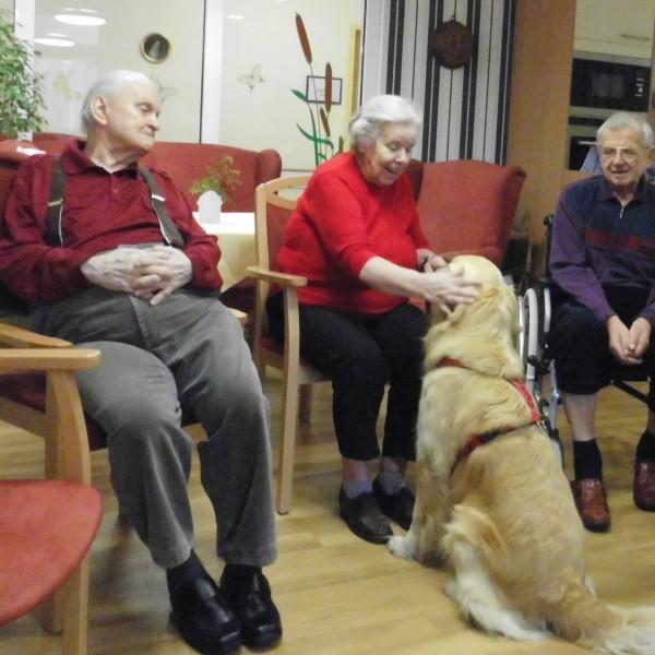 Therapiehund Curie beim Besuchsdienst in Bernau