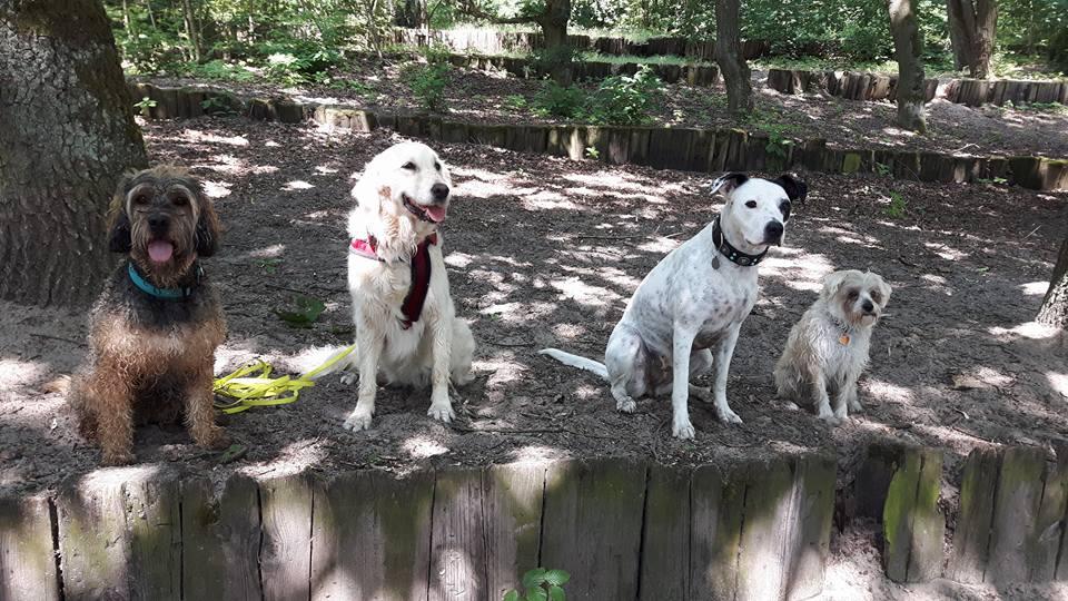 Der Hundespaziergänge im Rudel machen Spaß