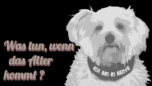 Hundegeriatrie - der Hund altert